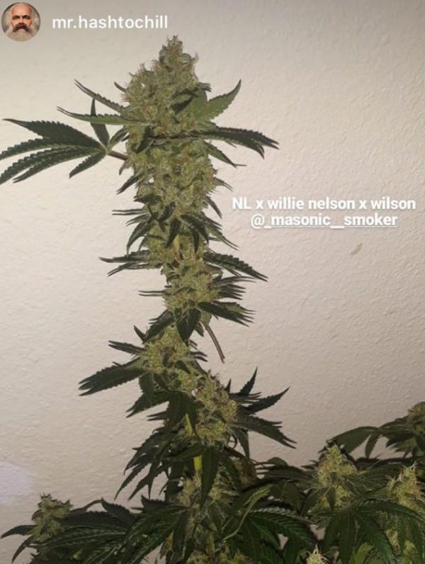 NL x Willie Nelson x Wilson
