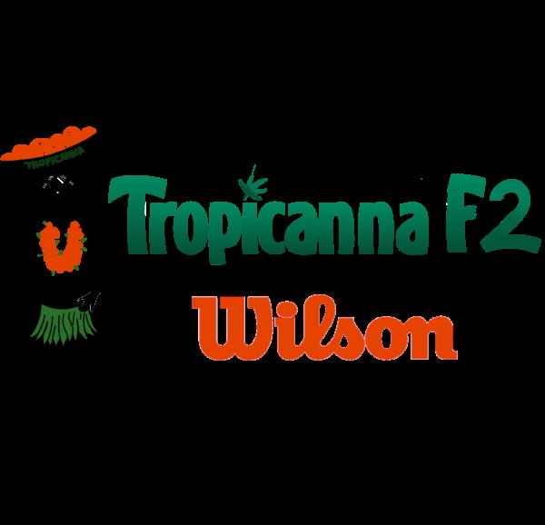 Tropicanna F2 X Wilson