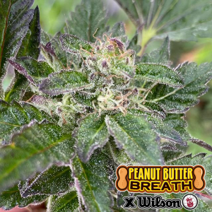 Peanut Butter Breath x Wilson