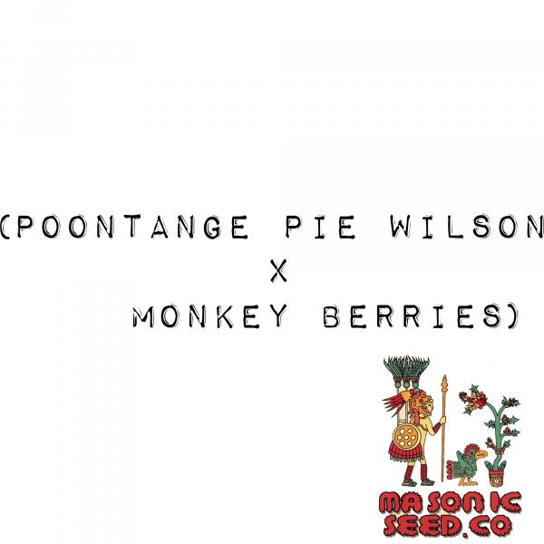 Poontange Pie Wilson X Monkey Berries