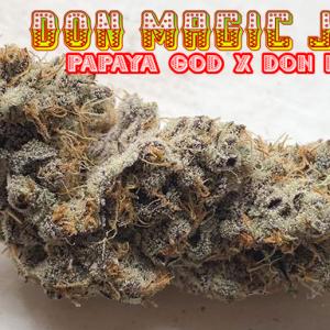 Don Magic Juan ( Papaya God X Don Mega)