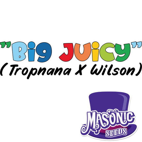 """Big Juicy"" Tropnana x Wilson"