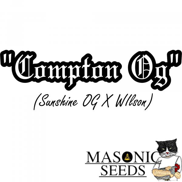 """""""Compton OG"""" (Sunshine Og X Wilson)"""