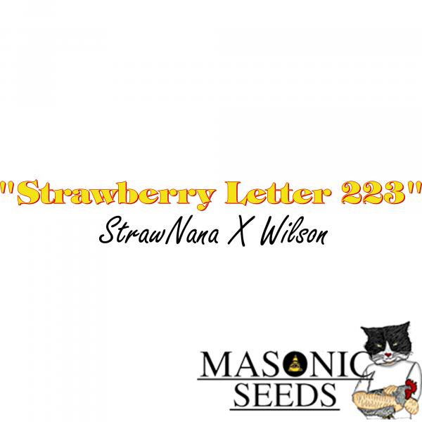 """Strawberry Letter 223""  (Strawnana X Wilson)"