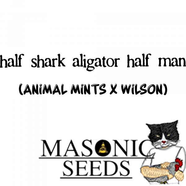 Half-shark-alligator-half-man (Animal Mints X Wilson)