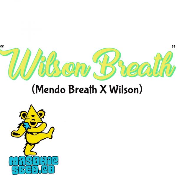 """Wilson Breath"" (Mendo Breath X Wilson)"