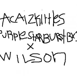 Acai Zkittles Purple Starburst Bx1 x Wilson