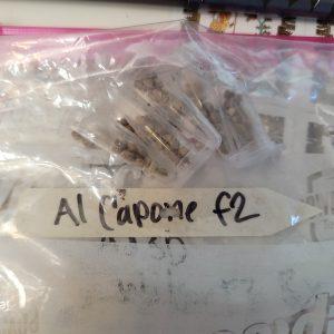 Al Capone F2 X Wilson